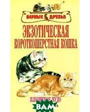 Аквариум-Принт Экзотическая короткошерстная кошка
