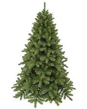 Triumph Tree Edelman Scandia (3.65м) зеленая