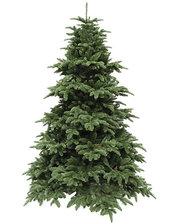 Triumph Tree Edelman Abies Nordmann de Luxe (2.30м) зеленая