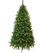 Triumph Tree Edelman Empress зеленая, 2.30м