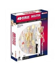 4D Master Скелет человека (26059)