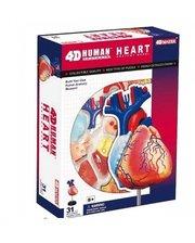 4D Master Сердце человека (26052)