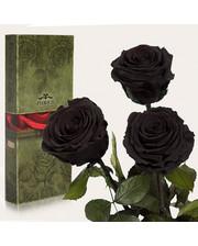 Три долгосвежих розы Черный Бриллиант 7 карат (короткий стебель)