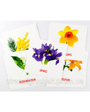 Зірка Цветы, карточки мини (укр.), Зирка (9789663336930)