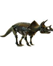 Dino Скелет динозавра - Трицератопс (D502)
